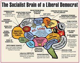 brain liberal democrat socialist