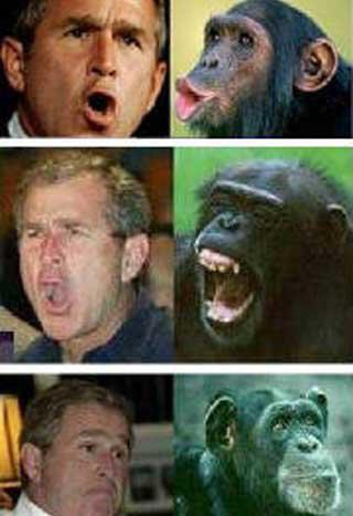 300633_193926727343525_681517585_n ape comparison bush