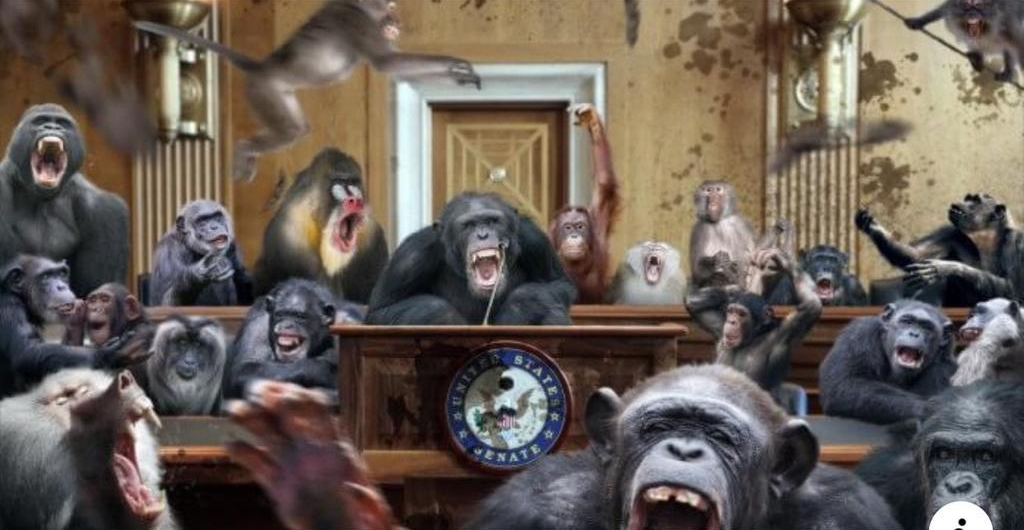 Feinstein's Flying Monkey Circus