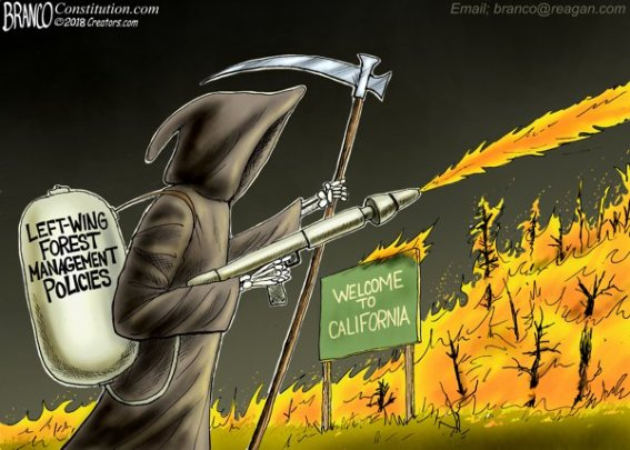 democrat arson blanco california fires forest management policies grim reaper