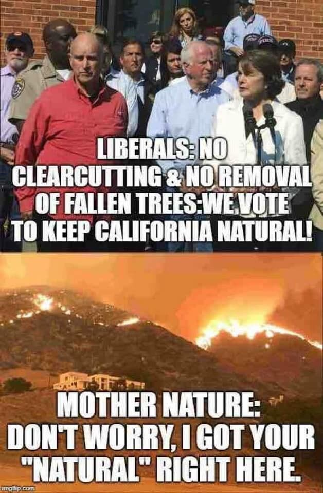 DEMOCRAT ARSON CALIFORNIA FIRES
